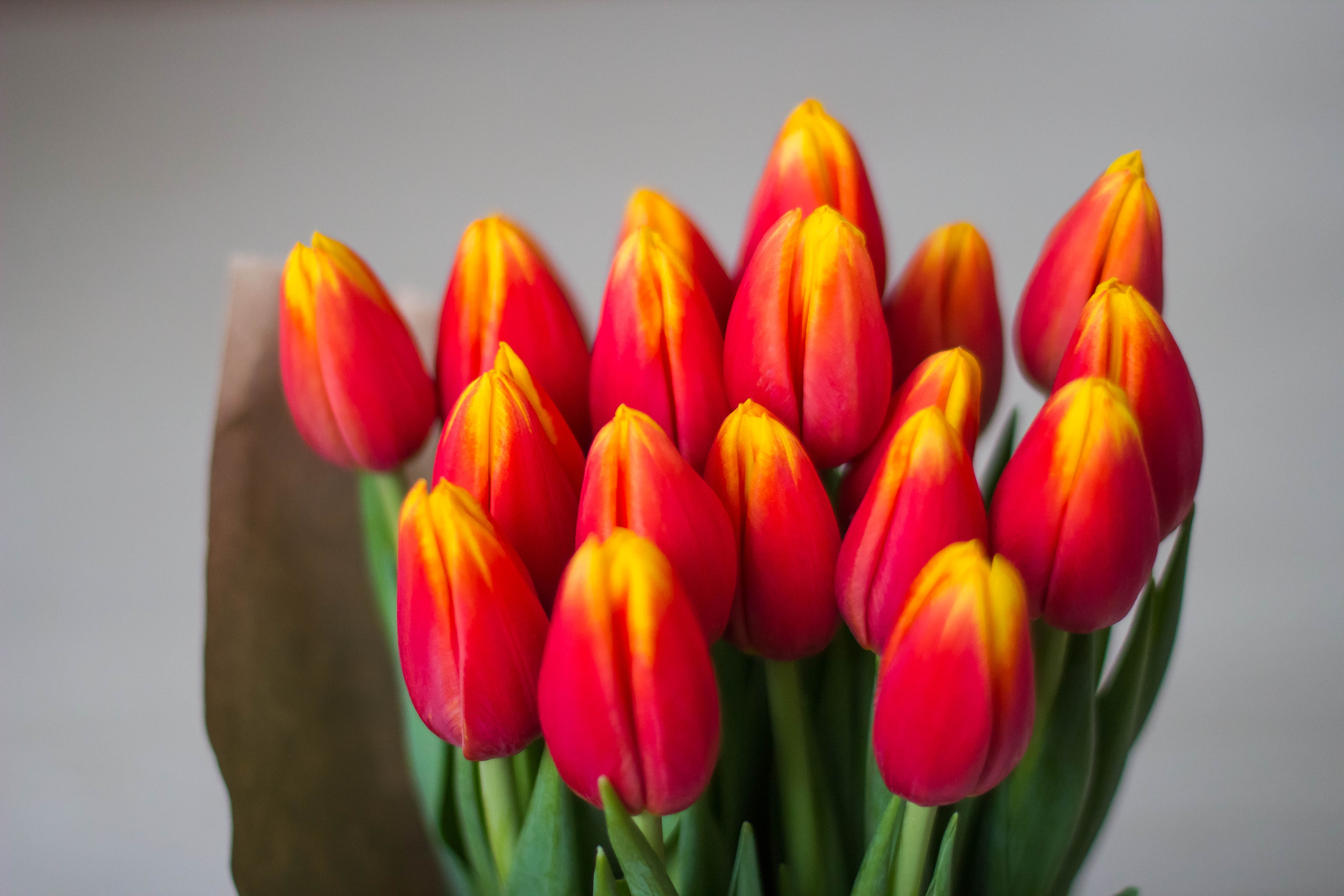 tulips-1228322